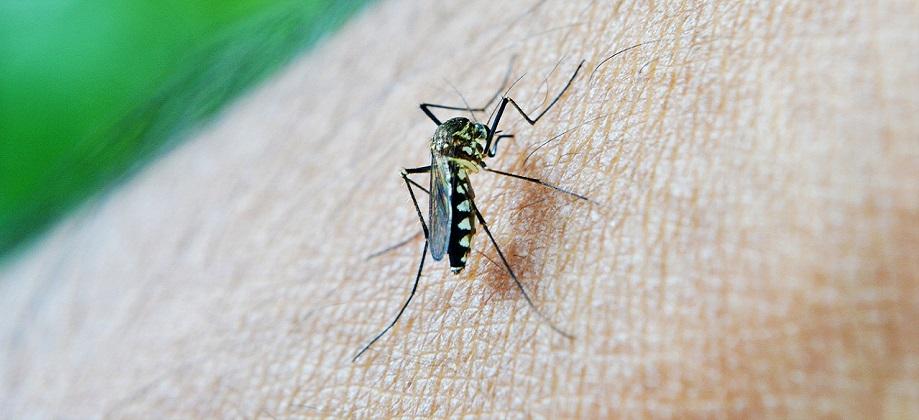 prírodný repelent deti emamamamu komár kliešť